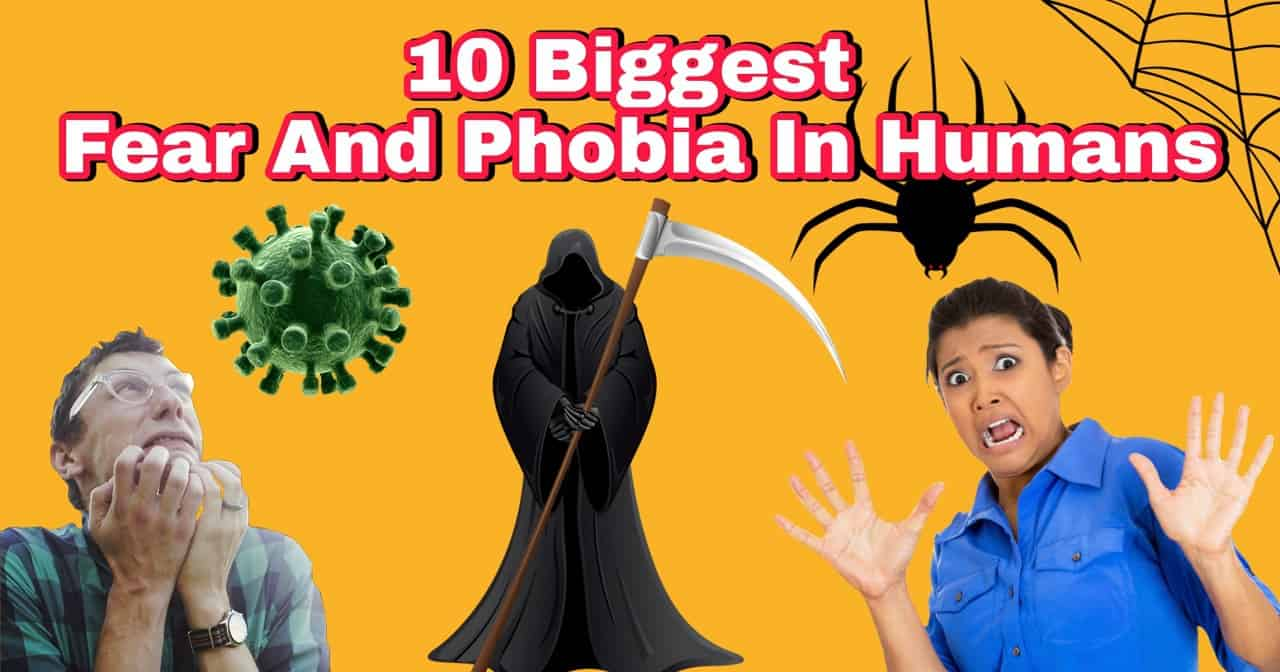 fear and phobia
